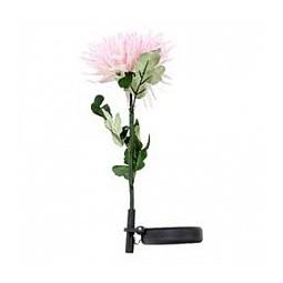 Купить цветок гортензия в горшке