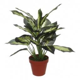 Купить Растение в горшке 'Home-Religion' (43 см) Диффенбахия 58008300